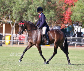 """Joanne Prestwidge and her Champion Small Hack """"Royalwood West End""""."""