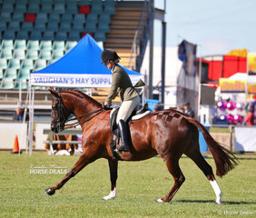 """A'aneeka"" ridden by Phoebe Sviderskas went Reserve Champion Large Show Hunter Galloway."