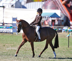 "Tyler Sams rode ""Owendale Honeycomb"" to win the Open Pony12-12.2hh class and his Boy Rider under 12 years class."