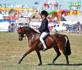 "Veronica Langthorne's ""Highgate Pop Muzik"" placed 3rd in the Open Pony 13-13.2hh class."