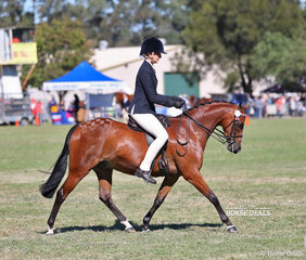 """Alyssa Walsh riding """"Deanhills Royal Affair"""" to a 3rd placing in the Open Pony 13.2-14hh class."""