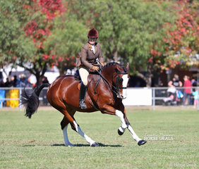 "Laura Northover puts ""NV Hudson"" through his paces for a 4th placing in the Adult's Small Show Hunter class."