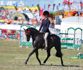"""Kasey Currall rode Elsie and Sarah Rieger's """"Pickwick Park Mr Darcy"""" to win Champion Large Pony from a strong line up of ponies. They went on to be declared Supreme Champion Saddle Horse of the Show."""