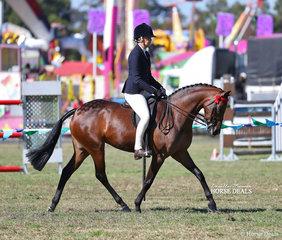 "Joanne Stewart rode ""Kolbeach Jemima"" to take 2nd place in the Open Pony 13.2 - 14hh class."