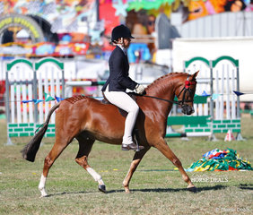 "Sophie Rich's ""Canyon Quasar"" was ridden by Kirsten Strath to win the Open Pony 12.2 - 13hh class."