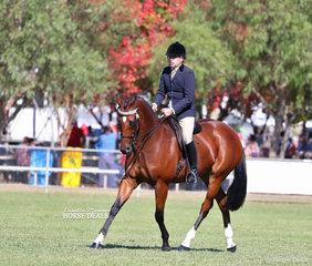 "Champion Large Saddle Horse ""Gurrumul"" ridden by Robin Christie."