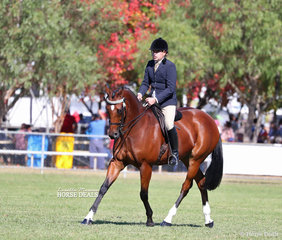"Champion Large Saddle Horse ""Gurrumul"" ridden by Robin Christie."
