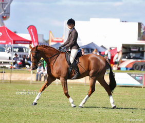 "Pictured competing in the Large Show Hunter Hack ring is Portia Eaton riding ""Dyrring Park Sullivan""."