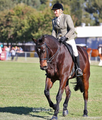 """""""High Voltage"""" ridden by Cecile Callaghan placed 3rd in the Adult's Large Show Hunter Hack class."""