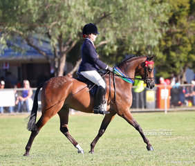 "Champion Small Galloway went to the lovely youngster ""KT Fine Design"", ridden by Rebekah Bennett."