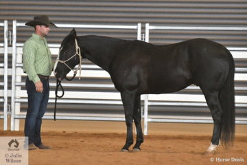 Bruno Robinson's, An Acre Named Sue was declared Champion Ranch Conformation and Grand Champion Ranch Conformation. Later in the day An Acre Named Sue took out the High Point Versatility award.