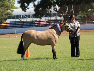 Champion Led Pony Beauman Park Buttons and Bows exhibited by Robyn Maroney