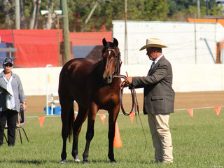 winner of the Stock Horse Colt exhibited by Jason Regan