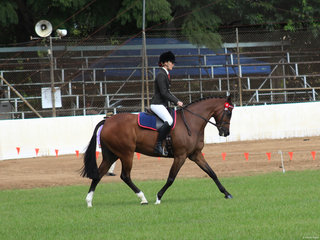 Tremayne Royal Opera exhibited by Charlee Anthony was awarded Supreme ridden all breeds horse of the Show