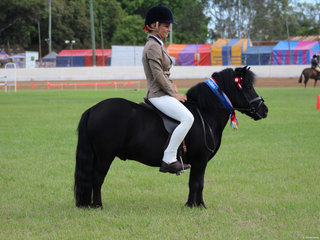 Champion Ridden Shetland exhibited by Liz Maroney