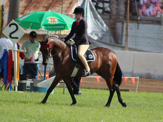 Working out to place in the ridden saddlepony