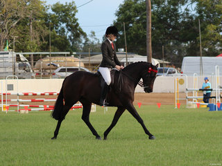 Reserve Champion ridden Riding Pony Tremayne True Moment exhibited by Charlee Anthony