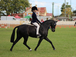Champion Junior Rider and Champion Open Pony Anastasia Blanch and Bordershow Brandy Alexander