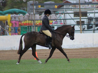 Champion SHow Hunter Galloway