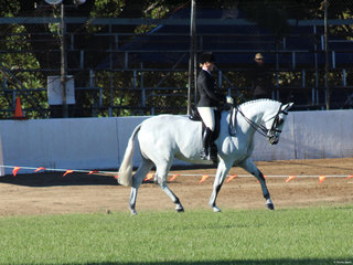 Supreme SHow Hunter Dicavalli Royal Gustav exhibited by Lindsey Blanch