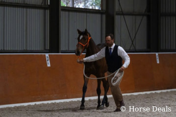 David May & Brin Encantadora. National Champion Junior Spanish Female