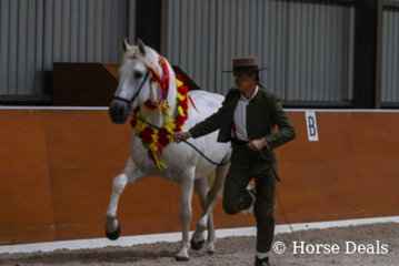 Jan & Josep Gudayol. National Champion Led Spanish Entire