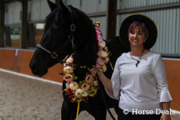 Noble Shadow Jarnica & Charyse May. National Champion Led Partbred Female