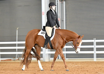 Bree Warren riding Absoloot Temptation in the Hunt Seat Equitation class