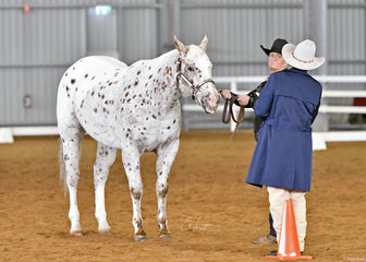 Carol Schwartz and JNH Totally Sweet, under the eye of judge Connie Barry in Showmanship.