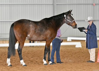 Denver Earl shown by Kelly Woolstencroft in Showmanship, with judge Connie Barry