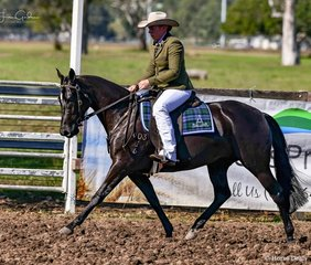 Beth Newton - Koorala Enchanted Rose 2nd place overall in the 2yr old Futurity