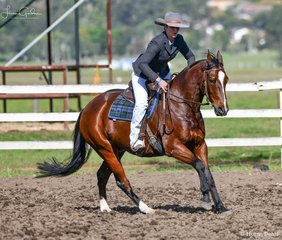 Tahlia McDonald - Tocal Looney Tunes in the working section of the Super Horse Challenge