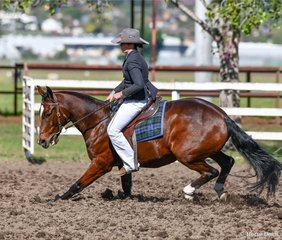 Tahlia McDonald - Tocal Looney Tunes doing a haunch turn in the Super Horse Challenge