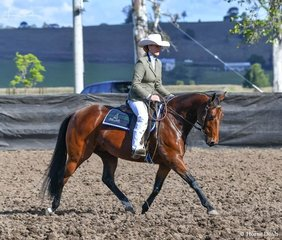 Heidi Gillett  - Fergalicious in the working of the Super Horse Challenge