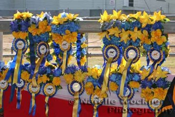 Beautiful garlands made by 'Rosettes By Ros' adorned the side rail in the arena awaiting presentation to the lucky winners