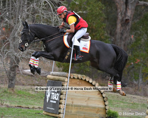 """Delwyn Olgilvy placed 3rd in the CCN3*-S riding """"Precious Dreams"""" with a final score of 40.80 picking up a 12.8 time penalty on cross country"""