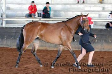 'Kolbeach Emerald' exhibited by Zoe Topcov working out for 2nd placing in the Show Pony Filly 3 yrs not over 14.1 1/2 hh