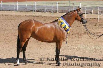 Supreme Champion Show Hunter Pony Exhibit 'Farleigh Carinthia' exhibited by Deborah Bell