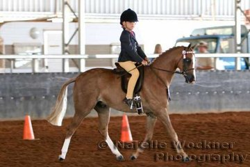 Placed 2nd in the First Ridden Pony 'Langtree Jazzman' exhibited by Douglas Family