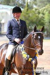 Champion Ridden Show Hunter Stallion 'Farleigh Nimrod' exhibited by Deborah Bell & ridden by Frank Thompson