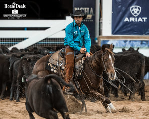 Hugh Miles and 'Weatland Rey Of Hope' in the first Go Round of the Open Derby