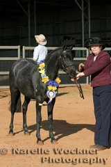 Champion Show Hunter Filly 'Koora-lyn Startime' exhibited by Joanne Frankish