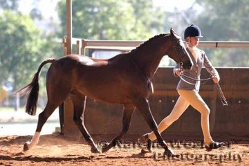 'Oaklands Park Prime Time' exhibited by Tamara Bondfield working out in the Senior Show Hunter Pony Gelding 13.2hh & ne 14.2h