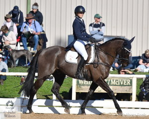 Clare Anderson is pictured aboard her interestingly named, 'Soberup' during the dressage phase of the Pryde's Easifeeds CCI4*-L.