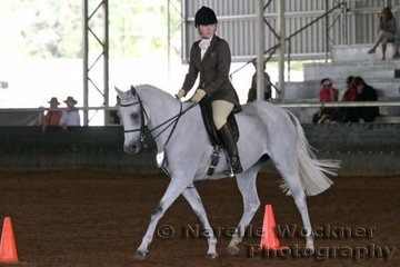 'Glenrowan Graphic' exhibited by Carroll Family working out in the Show Hunter Mare or Gelding Ridden over 13.2hh & ne 14.2h