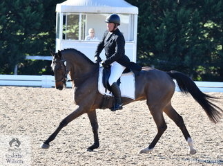 Michael Dagostino all the way from WA is pictured aboard her 'Kinnordy Gatow' by Gymnastik Star during the dressage phase of the Pryde's Easifeeds CCI4*-L .