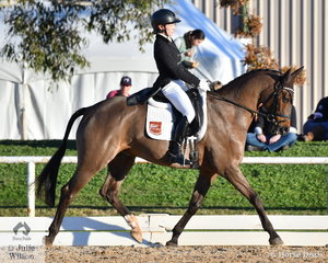 Not long back from representing Australian in New Zealand , Emma Mason is pictured aboard the Marco Polo Syndicate's, 'Warrego Marco Polo' on their way to fourth place after the dressage phase of the Pryde's Easifeeds CCI4*-L .