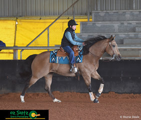 Sonitas Calendar Girl proves to be a great youth horse while taking her rider Tobin Smart around the arena in the Beginner Youth class.