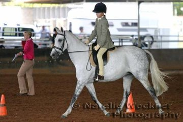 'Helden Park Spectre' exhibited by Taylor Family working out in the Show Hunter Mare or Gelding over 13.2hh & ne 14.2h