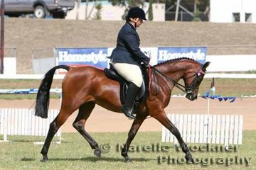 'Charaway Natasha' & Cynthia Lawer working out in the Open Purebred Bridle Path Hack